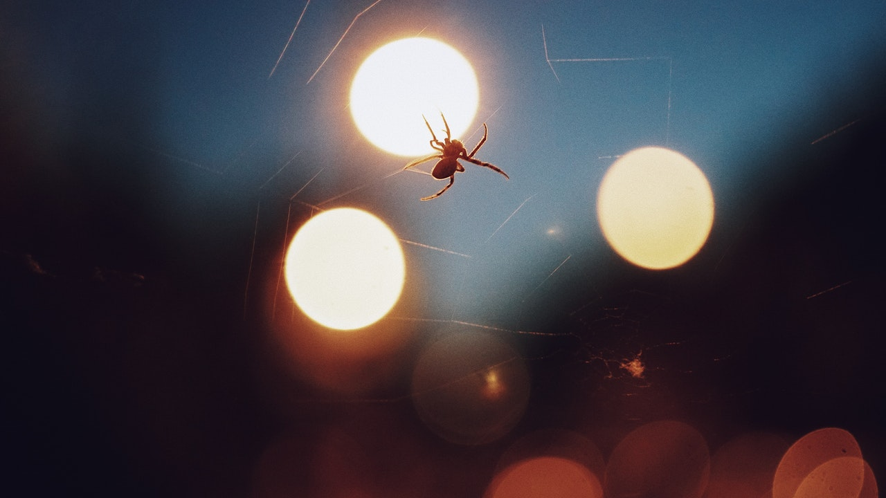 Spider in the lights at a football match